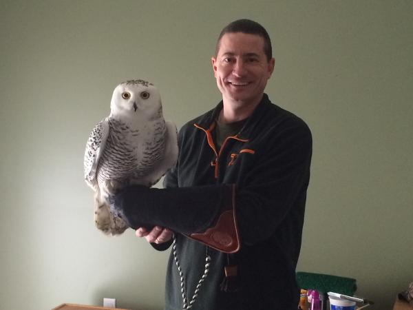 Snowy Owl : Aurora