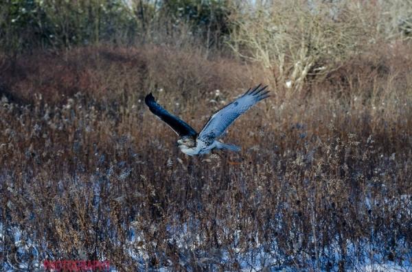 Cedar Flight
