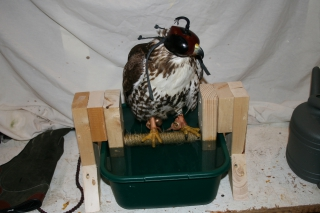 Talon Soaking Spa Perch