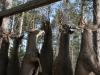 deer-camp-20153