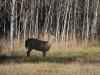 deer-camp-20155