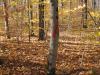 2014-hunt-tree