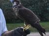 Sabre-Falcon-web