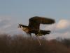 sabre-flight