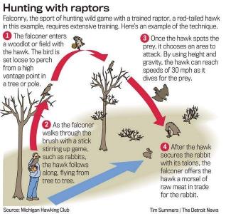 Hunting Diagram