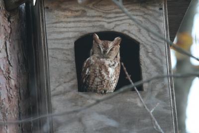 owl_house1