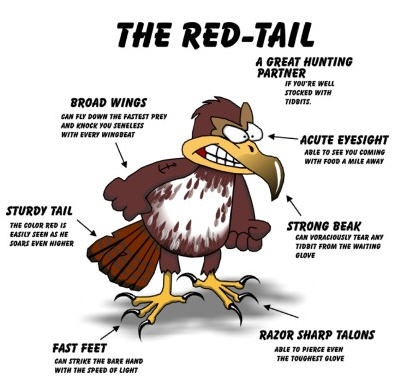 red_tail_cartoon_clearer