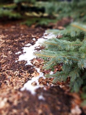 winter_fades